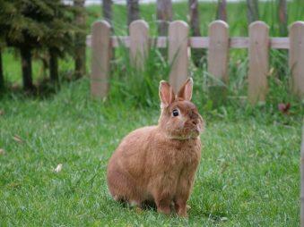konijn in de tuin